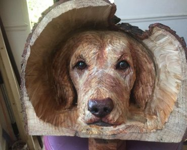 100 Amazing Carvings